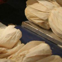 Estudiantes de Aguascalientes crean plato desechable con hojas de maíz