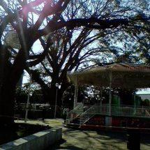 """Por representar un peligro, retiran árbol del parque """"Benito Juárez"""""""