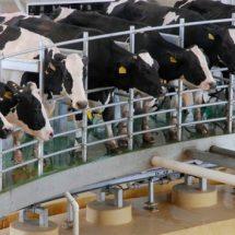 Productores de leche piden a AMLO reactivar economía en el campo