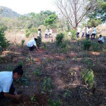 IMJUT y Dirección de Medio Ambiente reforestan el CONALEP 157 de Tuxtepec