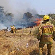 Diez incendios arrasan la selva Chimalapa