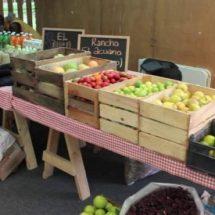 Promueven el consumo local a través de tianguis orgánico en Xoxocotlán
