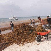 Sargazo no afecta a ecosistemas marinos, destaca especialista