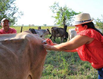 Alcaldesa Mayra Torres regaló dos mil dosis de vacuna para prevenir la rabia en semovientes