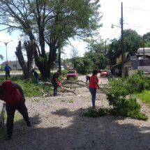 Protección Civil derrama árboles en la colonia del Carmen de Tuxtepec
