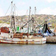Preparan embarcaciones para buscar camarón