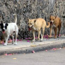 Exhortan a los gobernadores a esterilizar perros callejeros