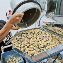 Tortilla industrial con maíz nativo