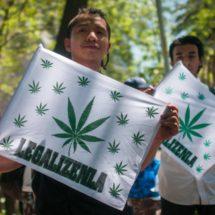El partido de López Obrador propone que el Estado se encargue de la compra y venta de marihuana