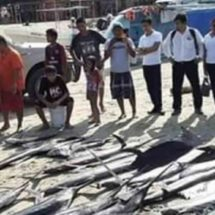 Embarcaciones utilizan 'cimbras' para pesca ilegal en Puerto Escondido