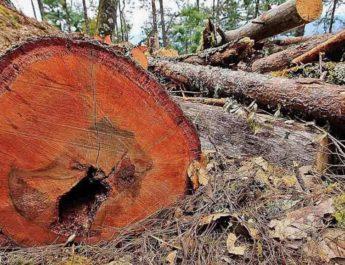 Devastan plagas las sierras de Oaxaca