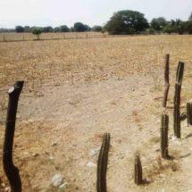 COVID-19 no detiene faena en el campo en Salina Cruz