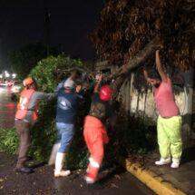 Gobierno de Tuxtepec responde ante daños por viento y lluvias ocurridos en días pasados