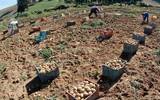 Campesinos tienen dudas ante eliminación de glifosato; ve por qué