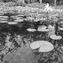 Llaman al rescate de la laguna Biahuidó' en Juchitán, personajes políticos pretenden invadirlo