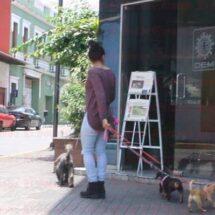 Reglamento de protección animal en Córdoba se actualiza